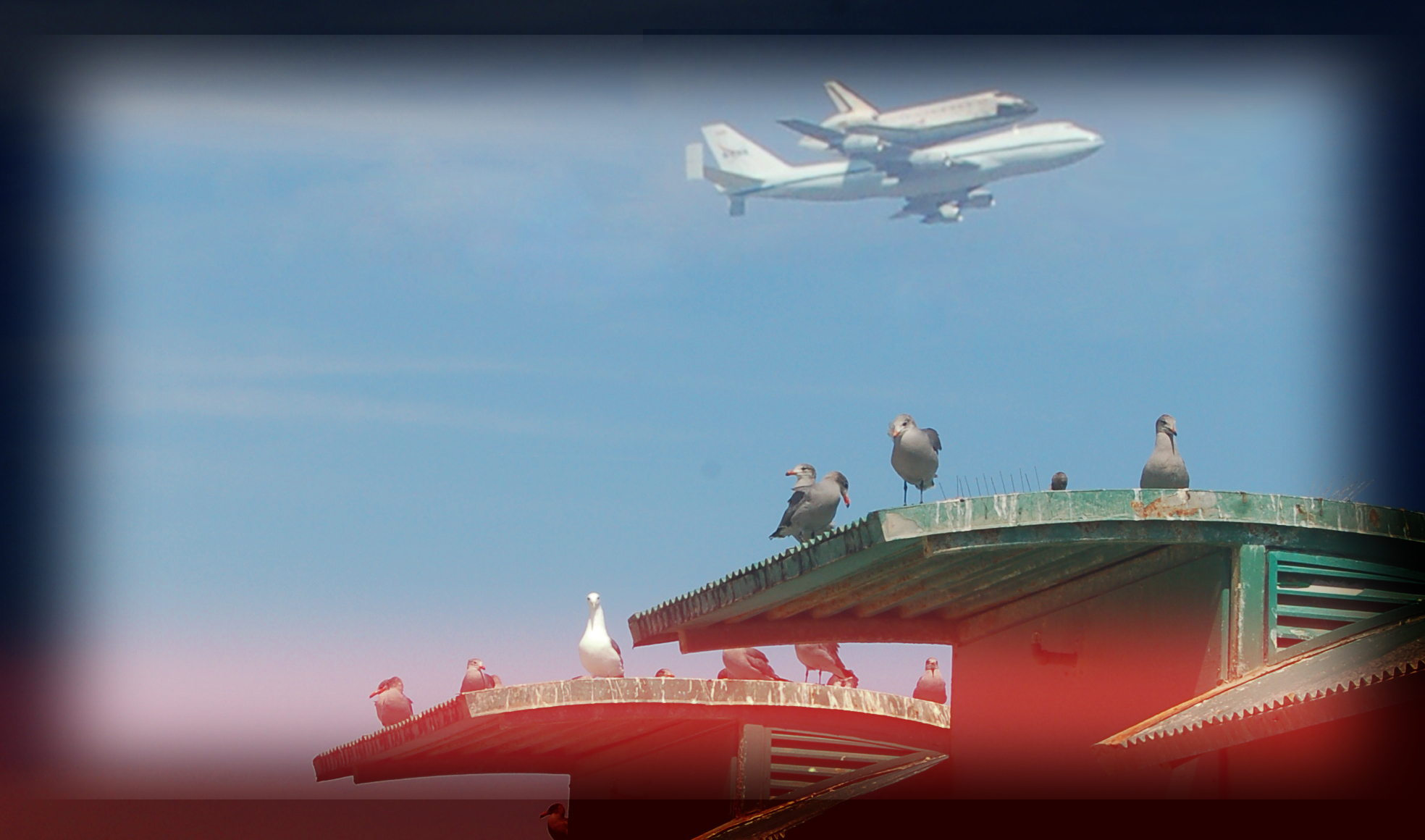 shuttle-endeavor-venice-birds